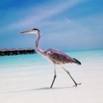 Umweltschutz auf den Malediven
