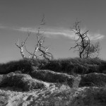 Weststrand des Darß