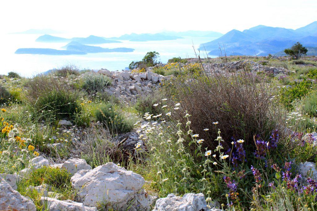 Blumenwiese in Kroatien im Mai